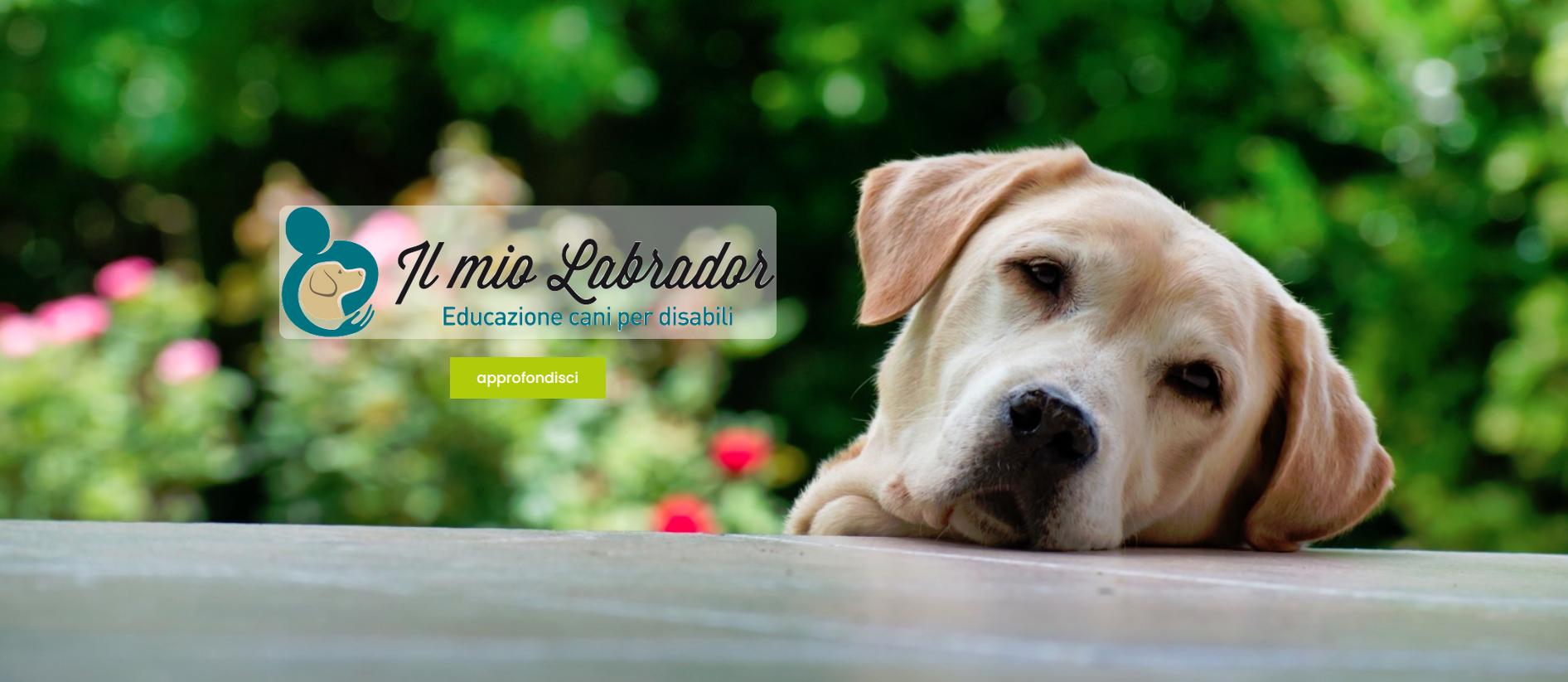 AIUTACI AD AIUTARE: aiutiamo L'associazione Il Mio Labrador nei progetti di preparazione cani di assistenza